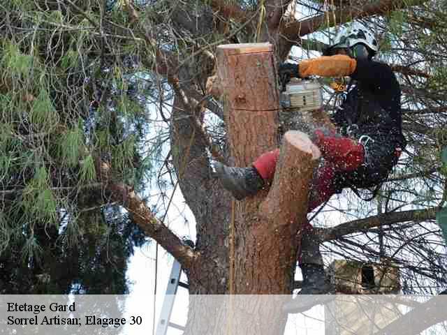 abattage arbre gard