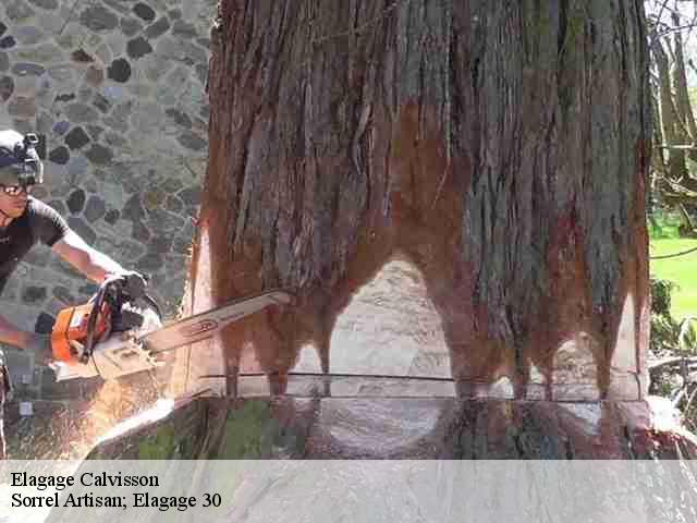 elagage d 39 arbre elagueur calvisson t l. Black Bedroom Furniture Sets. Home Design Ideas
